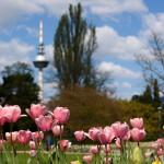 Luisenpark in Mannheim