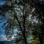 Thomas Detzner - Bäume 2