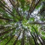Rudi Kottmann - Bäume-1
