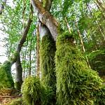 Rudi Kottmann - Bäume-2