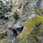 Rudi Kottmann - Bäume-3