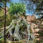 Rudi Kottmann - Bäume-4