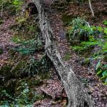 Willi Messer - Bäume-1