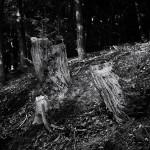 Martina Wolf - Mitten im Wald