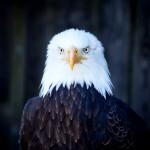 Thomas Detzner - Eagle 4