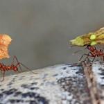 Helga Kroetzsch - Ameisen