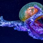 Thomas Seethaler - Jelly Fish