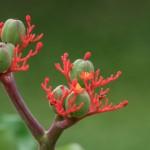 Nicole Ebert - Blüten und Früchte