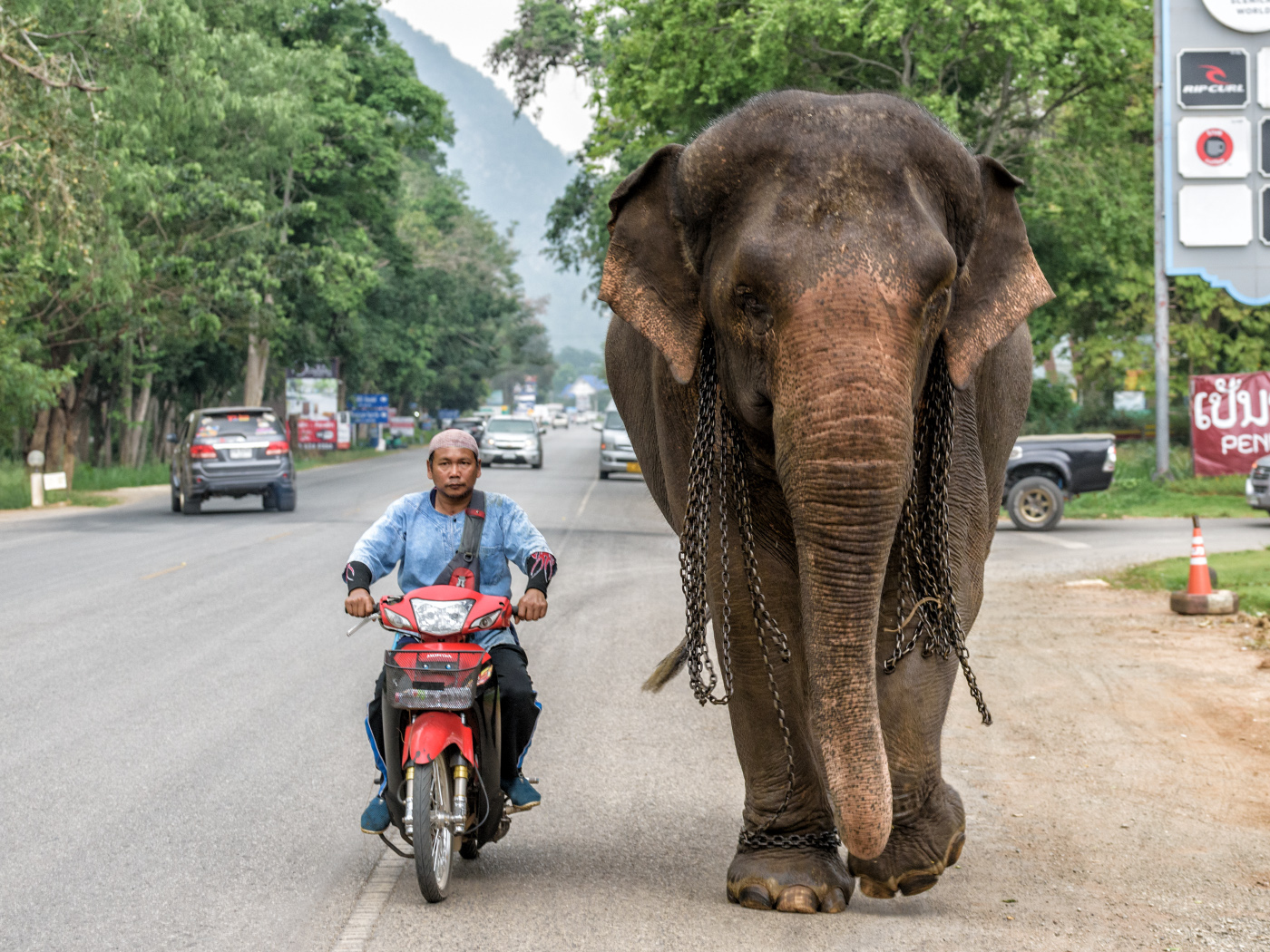 DS7_5628_Khao_Yai_Nationalpark_Thailand1 Kopie