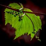 Thomas Detzner - Wilder Wein